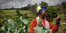 Women in Agriculture: A Toolkit for Mobile Services Practitioners